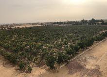 مزرعه للبيع بطريق الاسكندريه الصحراوى 10 فدان