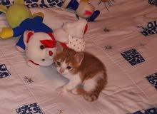 adorable cat ktir mahdoume