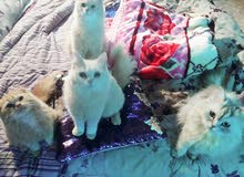 4قطط للتبني