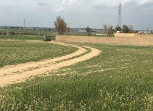 دونم ارض للبيع في طريق المطار منطقة زويزا من المالك المباشرة