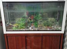 حوض سمك.