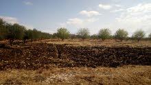 مزرعة للبيع مساحتها 120 هكتار