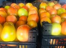 طماطم حبة كبيرة مواصفات تصدير