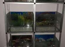احواض اسماك 8 احوض و طيب لعشاق الاسماك العرض نص 68سانتي