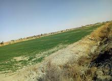 ارض زراعيه