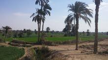 للبيع90فدان زراعية قابلة للتجزئة حتى 5فدان- مصر