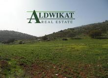ارض زراعية للبيع في الطنيب على شارعين مساحة الارض 10 دونم