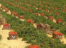 ارض زراعية للبيع القاهرة الجديدة