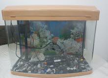 Aquarium/ Fish tank ( without fish )