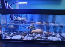 Turtle Tank and Accessories