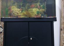 حوض سمك  كامل مع جميع ملحقاته كويتي اصلي مع الدولاب نفس اللون