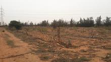 مزرعه للإيجار في الطلحيه عند محطة الوقود مساحة المزرعه 6هكتار