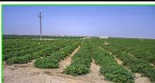 ارض زراعية مسجلة والتربة بكر - المنيا من خيرات مصر