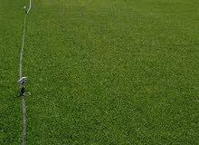 عشب ثيل نجيل طبيعي توريد وبيع في جدة0569844570