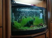بذور لزراعة احواض السمك