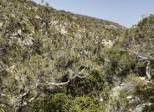 أرض سياحية غابة مطلة على وادي