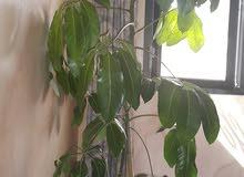 5 أصايص نباتات داخلية للبيت