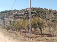 قطعة ارض للبيع بموقع استثماري مساحتها 6 دونمات مزروعة باشجار مثمرة