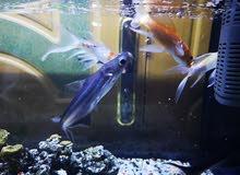 حوض سمك متر ونصف الطول في مترين