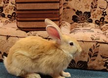 pets rabbit