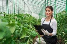 وظائف النرويج الزراعية - الحصاد والعمل الموسمي اكثر من 200 شاغر للذكور والاناث