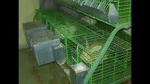 للبيع بطاريات ارانب مستعملة بحالة جيدة جدا