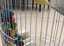 طيور للبيع مع القفص و العبه