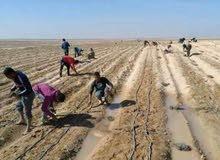بالتقسيط علي سنتين اراضي زراعيه مساحات مختلفه تبدا من فدان إلى 20 فدان