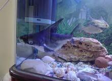 حوض سمك نوع نوبل للبيع