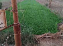 مزرعتك داخل مزراعنا للبيع مرزرعه مسجله للبيع