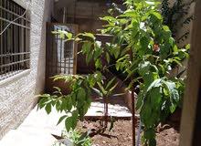 شقة في حي نزال الذراع الشرقي شارع غازي الحربي 13