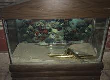 حوض سمك مع ديكور خشب