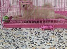 قفص كبير للكلاب والقطط