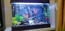 حوض سمك aquarium
