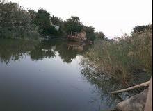 زورق فيبر كلاس طول  13 متر مال صيد للبيع