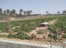للبيع دونم مزارع وبساتين مطله ع نهر دجله في بغداد/المدائن