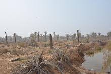 دونم زراعي في التنومه حي الغدير مساحة 2500 متر.