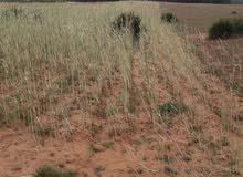 ارض جموع للبيع قرب تجزئة بريستيجيا بوقنادل سلا