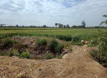 ارض زراعيه للبيع بالقليوبيه