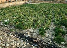 ارض بالبابلية جنوب لبنان مفرزة بجانب مزارع الحريري السعر 310000
