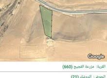 للبيع ارض 13.5 دونم في الشوبك مخدومات