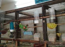 نشتري....اقفاص....الطيور....المستعمله..والمخاليف