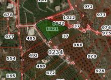 قطعة ارضة مفروزة مشجرة زيتون بجرش _ المجر للبيع  من المالك مباشرمساحة 3.637 دونم