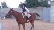 تدريب وتعليم علي ركوب الخيل