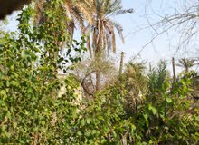 اراضي زراعية للبيع كل 200مترب30 مليون