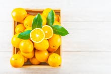 Citrus Valencia Exclusive from Organic Co. For Import, Export, Trade Agencies & Supplies