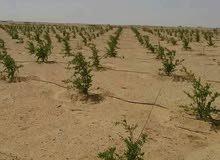 استثمر اموالك في قطعة ارض زراعية قابلة للتجزئة حتي 5 فدان تربة رملية خصبة للغاية بكر جاهزة للزراعة