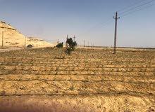 قطعة أرض زراعية 15فدان مسجلة موقع متميز الصورة من أرض الواقع