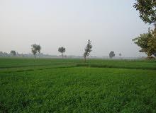مطلوب مزرعة او أرض للبيع