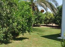 ارض 4 دونم للبيع في السلط السرو ابو طارة  مع بيت ريفي مساحه البيت 200 م